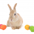 GOOD TO BE… MINDFULNESS at EASTER For Children Teens and Parents